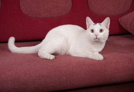 hvid kat i sofa