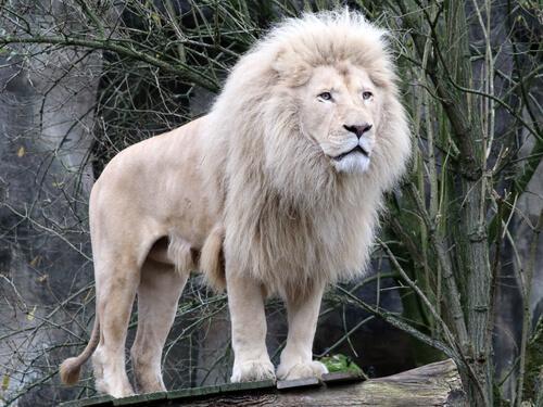 5 vilde dyr, du sandsynligvis aldrig har set før