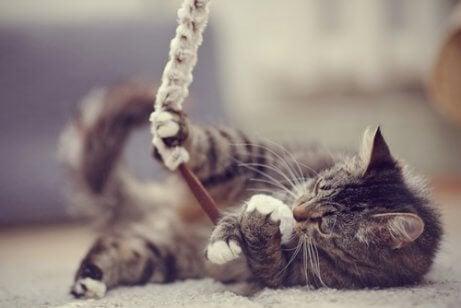 hvordan man bliver en kats ven