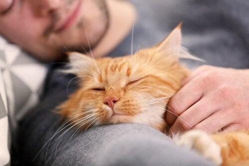 Ejer i gang med at sove med en kat