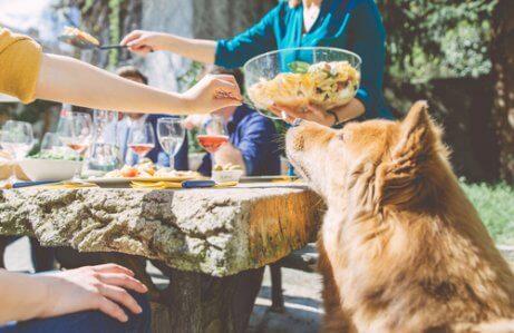 Hund sidder ved families middagbord
