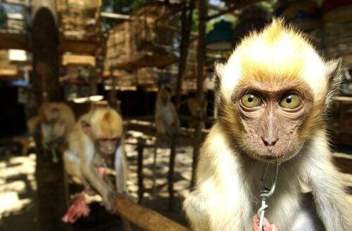 Spanien, porten til illegal dyrehandel i Europa
