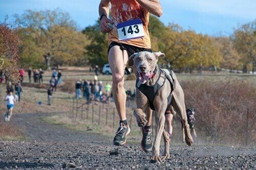 hund og ejer i konkurrence