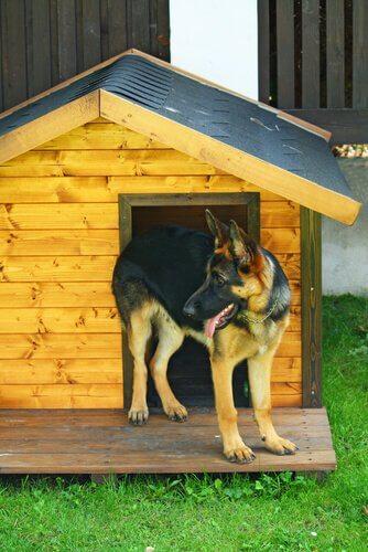Glad hund med hundehus