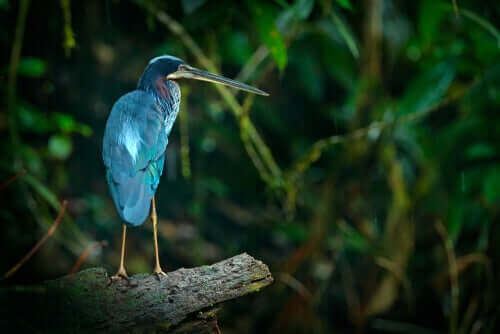 Fugl med en smuk blå fjerdragt
