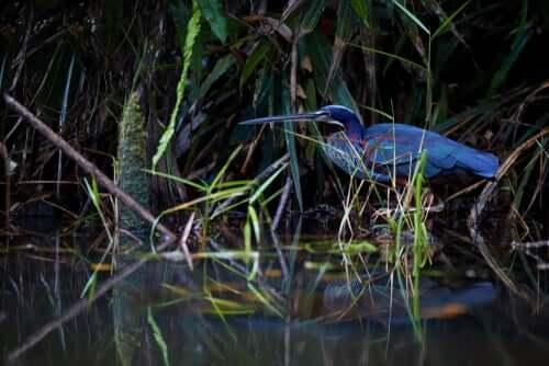 her står fuglen stille og venter på fisk