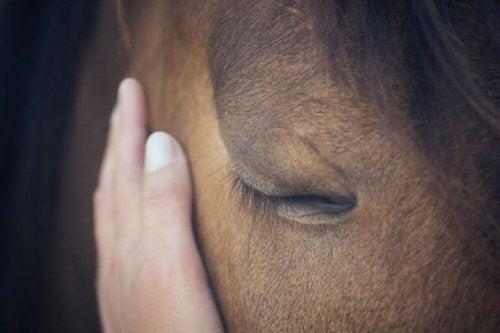 Kropssprog og berøring spiller en stor rolle i kommunikationen mellem ejer og hest