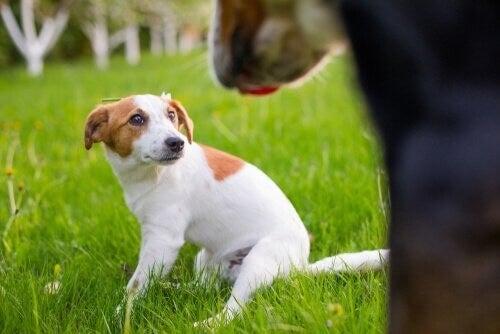 Hund sidder i det grønne græs