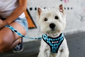 Halsbåndet er ikke særlig rart for din hund