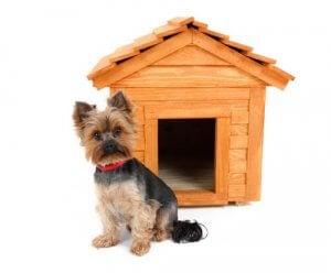 Hund foran hundehus af træ