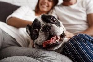 Hund ligger i sofa med ejere