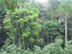Jungle i Afrika