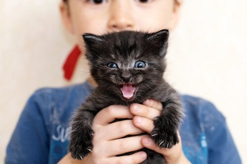 Killing, der holdes af dreng, viser glæde og grund til, at katte spinder