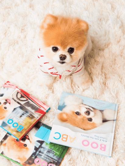 Lille hund med magasiner
