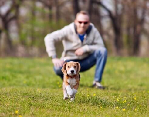 Undgå, at din hund løber væk under gåturen