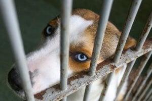 Hund bag tremmer illustrerer adoption af en efterladt hund