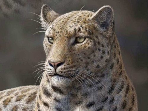 5 uddøde vilde katte, der vil forbløffe dig