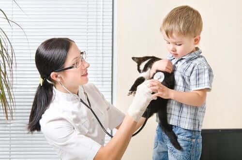 dreng med sin kat hos dyrlægen