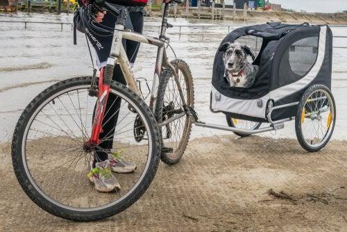 Brug en cykeltrailer til hunde