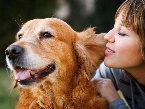 Glad hund med sin ejer
