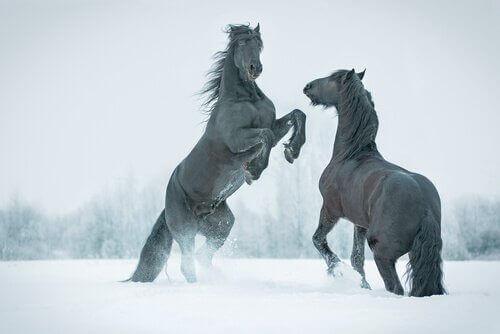 Dyr i reklamer: To heste, der bruges til tv-reklamer