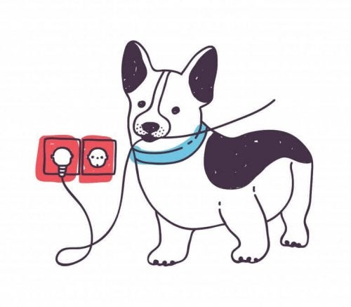 Hund bider i kabel og symboliserer en af de mest hyppige ulykker med kæledyr