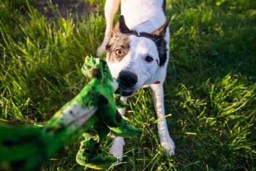 """Min hund tygger på alting"": Sådan stopper du det"