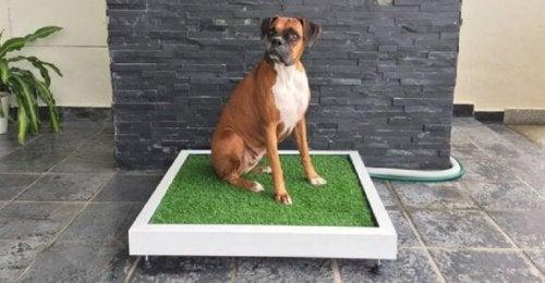 Hund sidder på eksempel på træningsmåtter til hunde