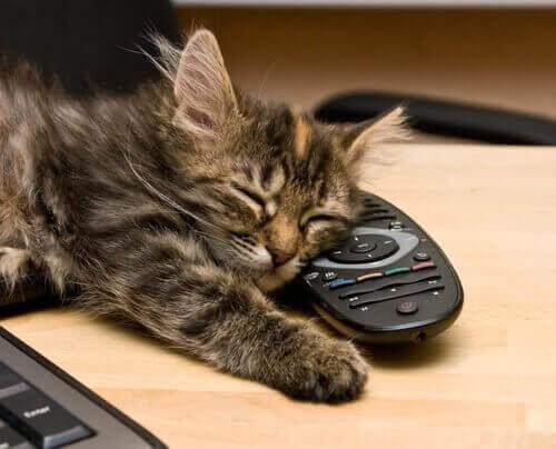 Kat sover på fjernbetjeningen