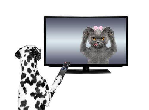 Dyr i reklamer på TV
