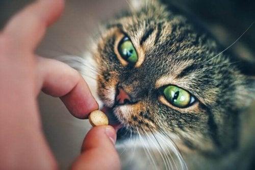 Kat får medicin
