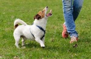 Hunde reagerer bedst på belønninger