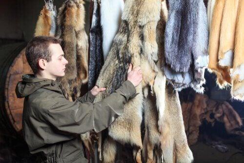 Pelsindustrien: Mand ser på pels