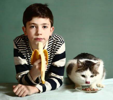 Ernæring for katte: Sikre frugter til katte