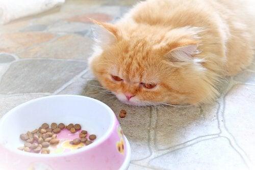 Kat med tab af appetit