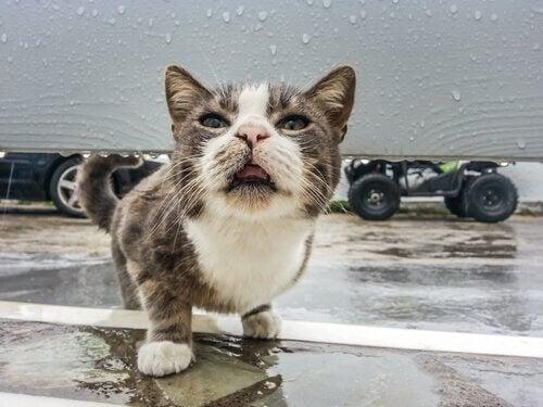 Kat går på en våd overflade