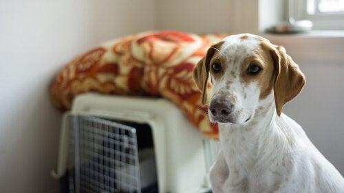 8 tips til at tage sig af et kæledyrs sikkerhed