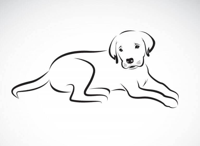 sådan kan du tegne et kæledyr