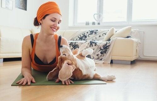 Fordelene ved yoga for hunde