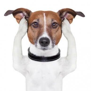 Skønhedspleje og produkter til hunde