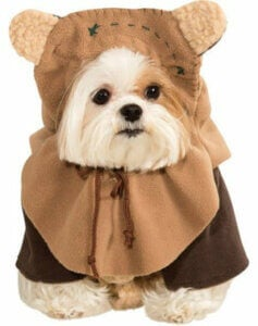 Kostume til en hund