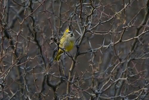 Gul fugl i træ
