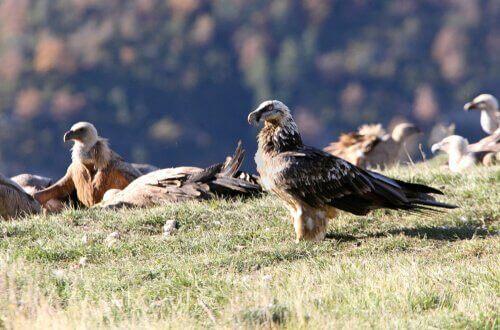 Fugle sidder på græs på klipe