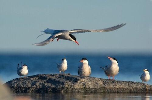 Fugle sidder sammen ved hav