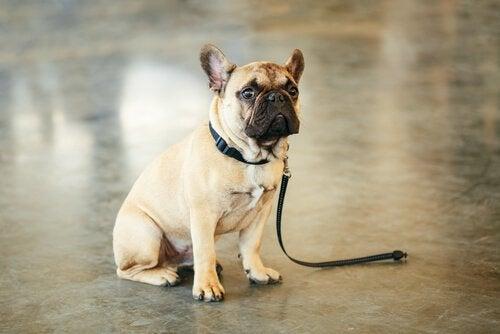 Tips til at hjælpe dig med at finde et forsvundet kæledyr