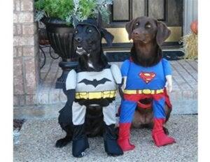 Kostume til en hund som superhelt