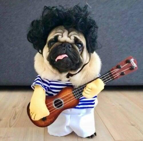 Sådan finder du bedst et kostume til en hund