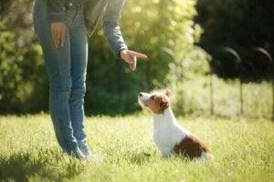 Ejer straffer hund, hvilket er en af de almindelige fejl i hundetræningen