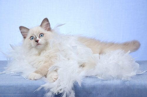 5 ting, du bør vide om fældning hos katte