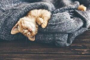 Killing i tæppe viser, at katte ikke kan lide kulde